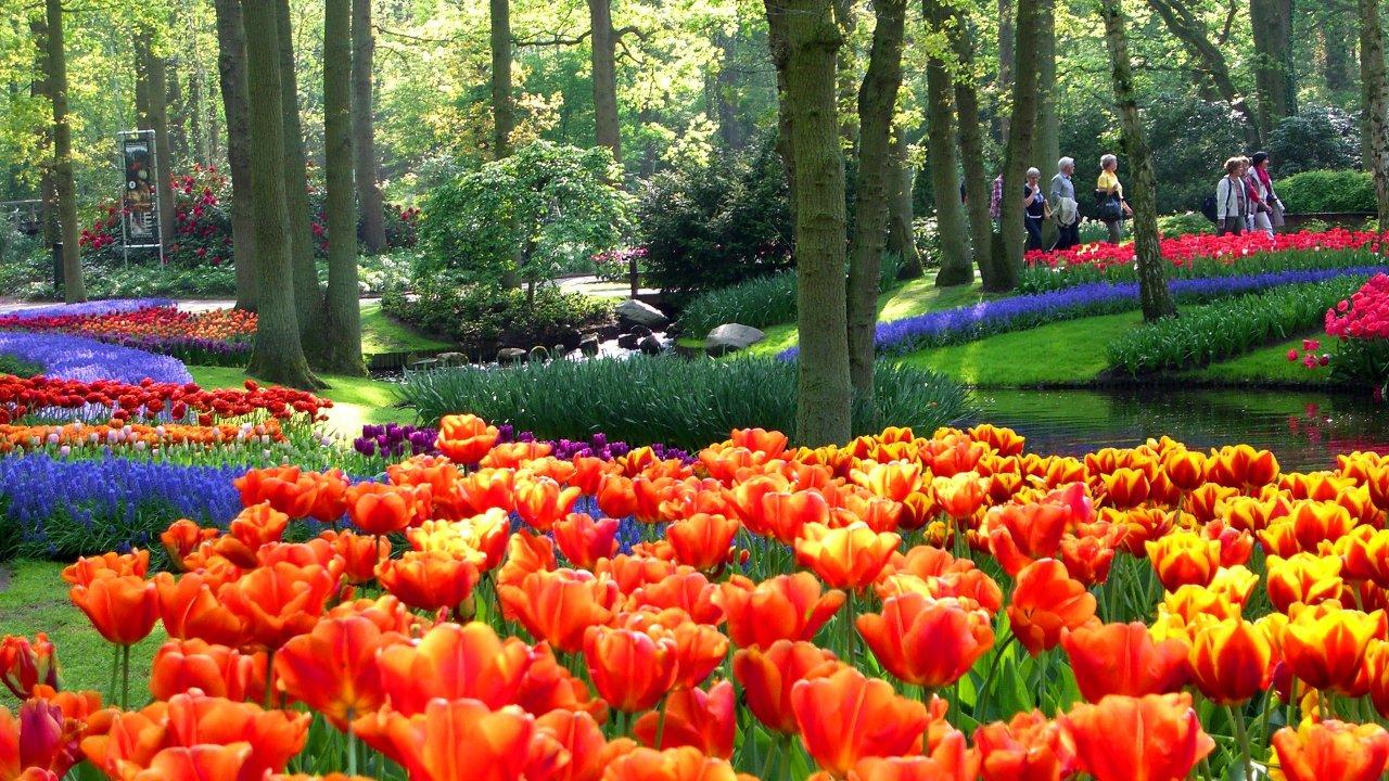 Keukenhof Çiçek Bahçeleri