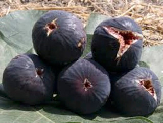 Kayınbabamın kara incirleri ve T'ai Chi Ch'uan