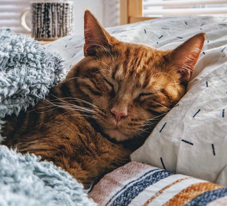 Kedilerde Görülebilecek Belli Başlı Rahatsızlıklar Nelerdir?