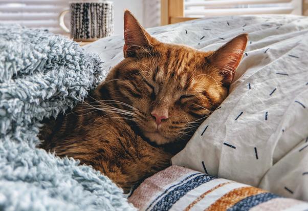 Pet-Ture - Kedilerde görülebilecek belli başlı rahatsızlıklar nelerdir?