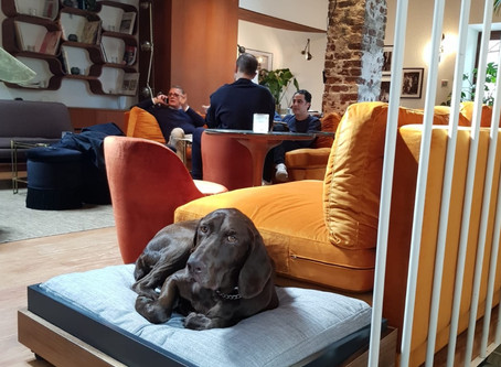 PET-TURE in Pet Friendly Locations in Istanbul