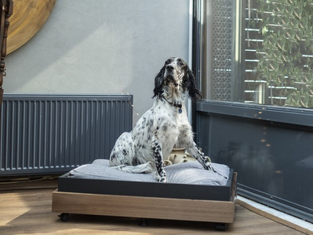 What Should Be Considered When Creating In-House Areas For Your Dogs?