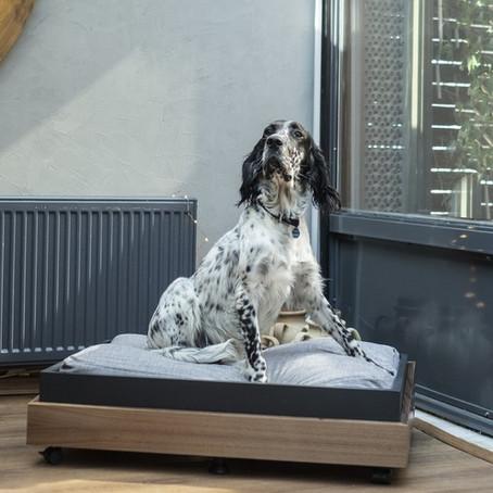 Köpekleriniz İçin Ev İçi Alanlar Oluştururken Nelere Dikkat Etmelisiniz?