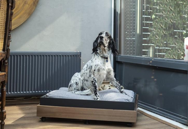 Köpekleriniz İçin Ev İçinde Alanlar Yaratırken Nelere Dikkat Edilmelidir?