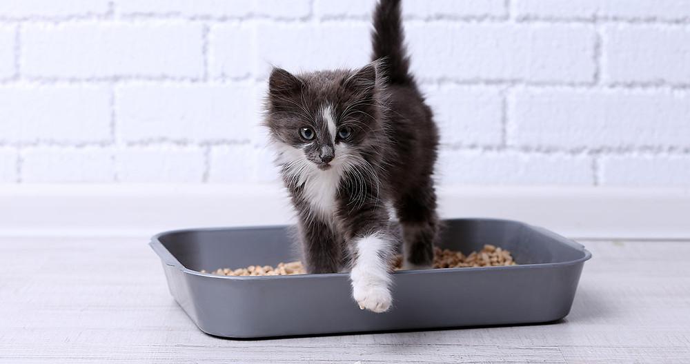 Pet Ture / Yavru kedi bakımı