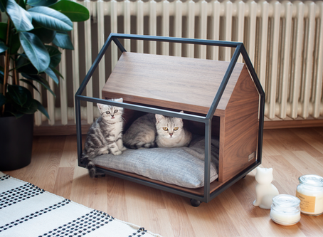 How Can You Create Enjoyable And Interesting Areas In Your Home For Your Cat?
