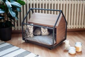 Pet-Ture - Kediler için ilgi çekici mekalar