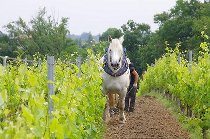 Organic Wine .jpg