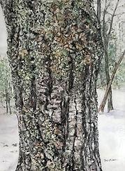 Cheryl_Chidester-Winter_Lichens-watercol