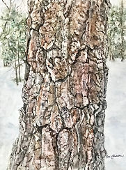 Cheryl_Chidester-Winter_Oak-watercolor_C