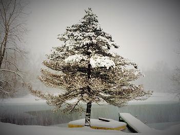 Winter_Solace.jpeg