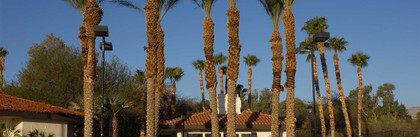 Palm Trees at Tennis Courts