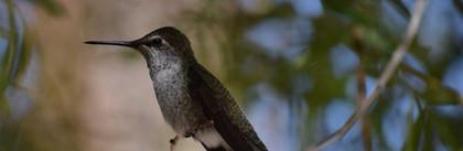 Hummingbird at La Casa