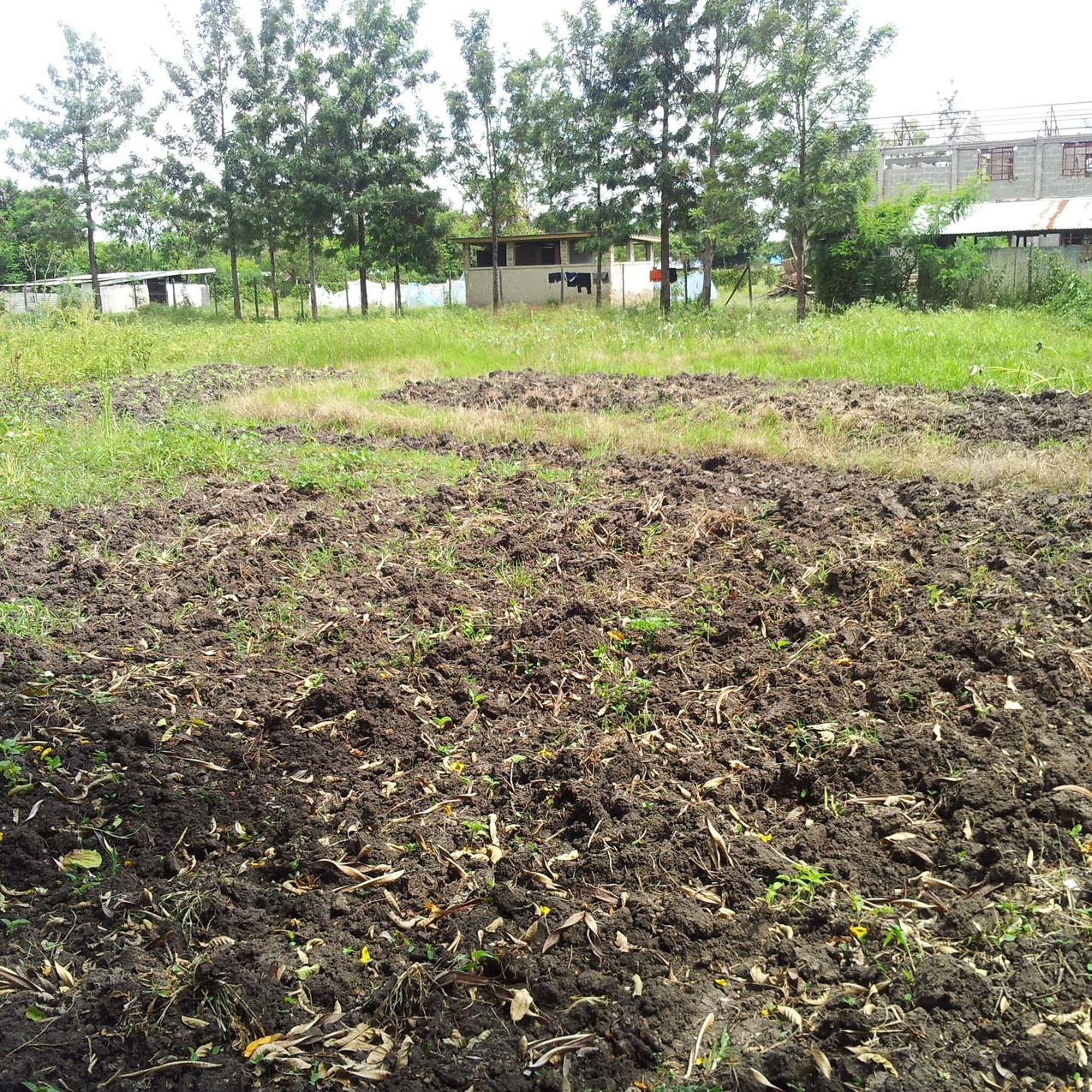 Ebenezer farm 2