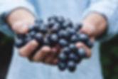 snoeien van druiven