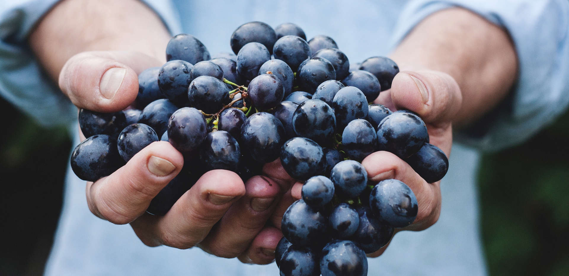 About 700 grapes go into one bottle of wine.
