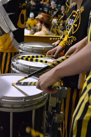 Striped Snares 2017