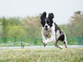 オリンパス愛犬フォトセミナー情報公開