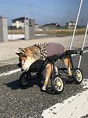 4輪車椅子写真s.png