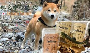 yamameイベントpops.jpg