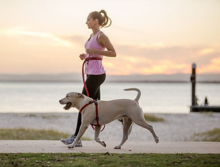Road Runner Leash image1.jpg