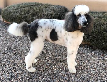 EYCK DOG ALDEA