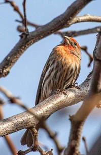 Birds of Aldea de Santa Fe