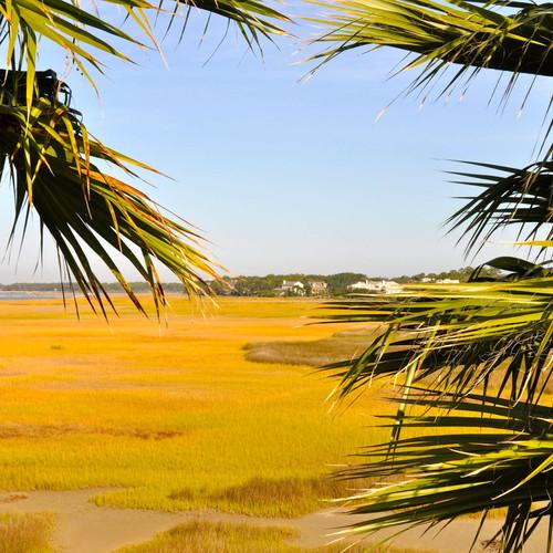 yellow marshes.jpg
