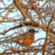 BIRD aldea.jpg