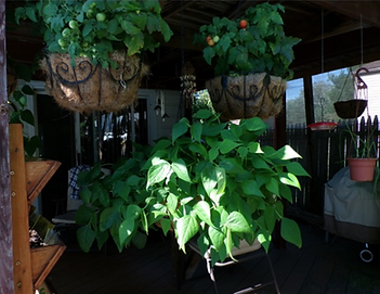 hanging pots.PNG