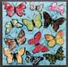 butterfly coaster blue