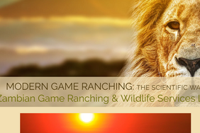 Bwana-Game - a Professional service website