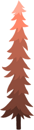 Red pine tree
