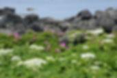 利尻島 利尻山 登山 山 沓形 鴛泊 礼文島 礼文岳 姫沼 南浜湿原 利尻島ガイド 礼文島ガイド ポン山