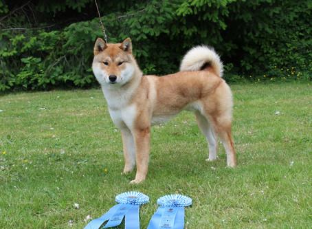 Akashima announces breeding plans: