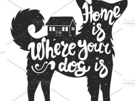 Koji Finds a Home