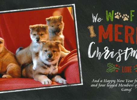 Our Christmas card to you!