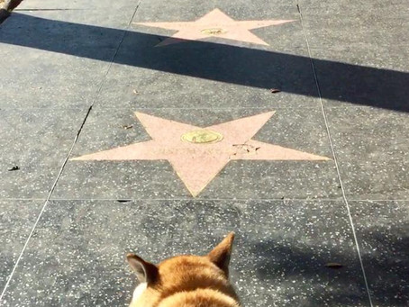 Mura goes to Hollywood (and 100 other places)