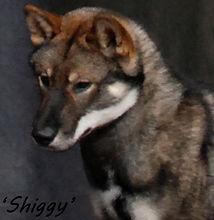 Shiggy Frame Head (003).jpg