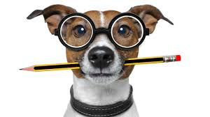 If Your Dog was a Teacher...