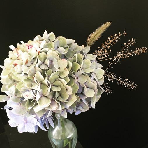 Hydrangea, grasses