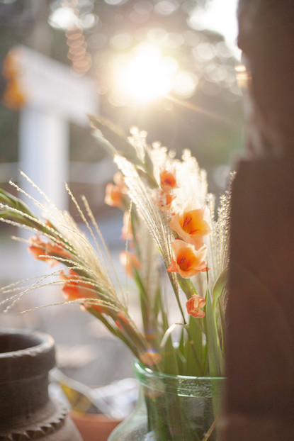Afternoon light, grass, gladiolus