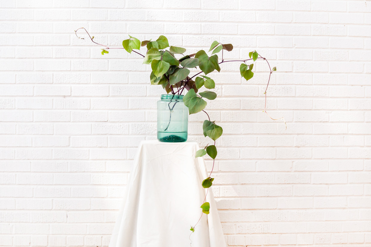 Hyacinth bean vine, glass vase
