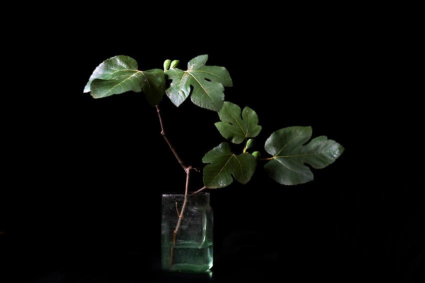 Fig, glass vase