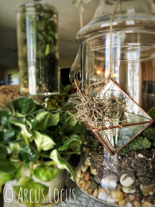 Hanging glass pyramid plant holder boho for airplant or succulent this adorable little glass air plant holder would be perfect hanging from a chandelier or near the window add a fdavorite crystal airplant keepsake aloadofball Image collections
