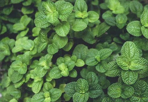 Herbs - Indoor Farming.webp