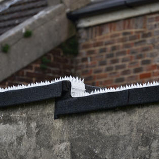 Effective deterrent for flat roofs