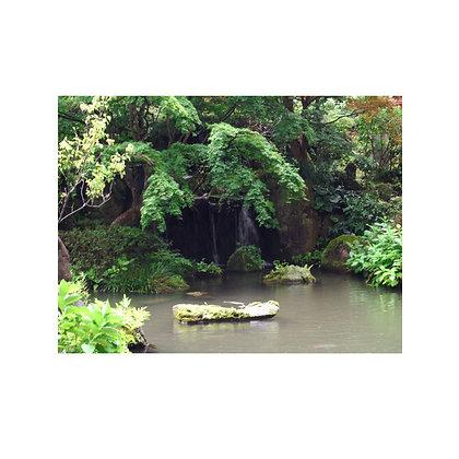 自然樹庭園