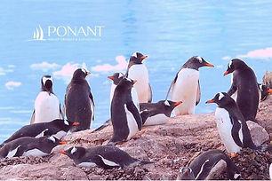 12D Emblematic Antarctica | Departure 8 Dec 2021 | 3 Jan 2022 and Other Dates