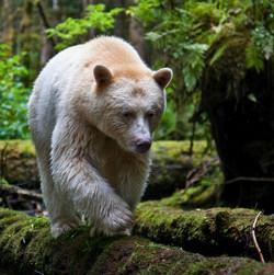 Kitimat/Great Bear Rainforest